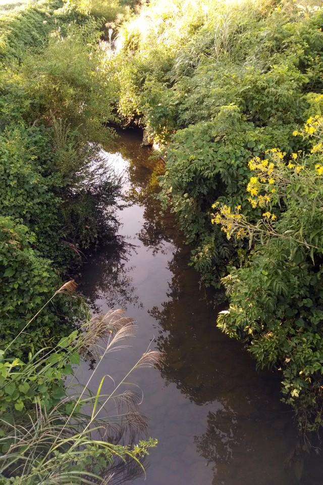 Sweeten Creek - NC Garden Gals